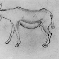 drawings_166.jpg