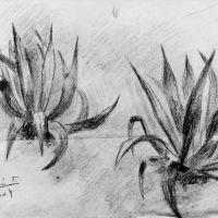 drawings_55.jpg