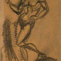 drawings_109.jpg